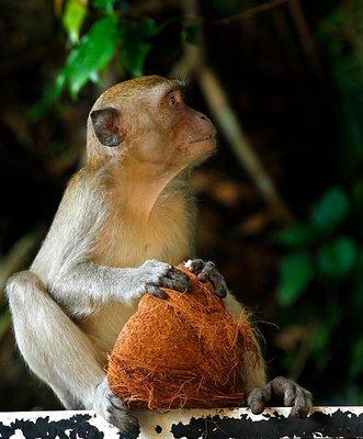 monkey_nuts.jpg
