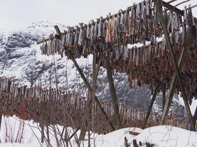 Fish drying in Å
