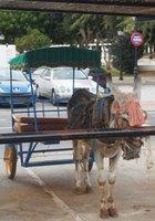 A donkey taxi