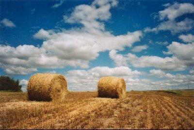 saskatchewan-plains.jpg