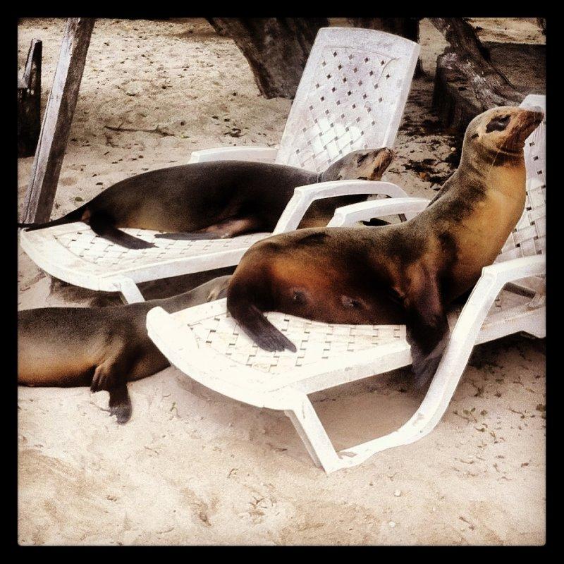 Chilling Sea-lions - Isabela Island