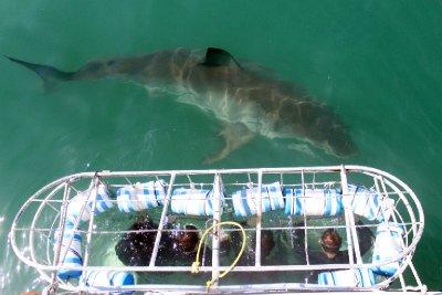 sharkcage.jpg
