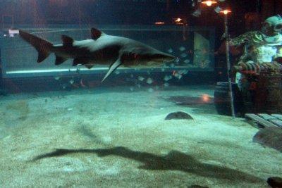sharksdinner.jpg