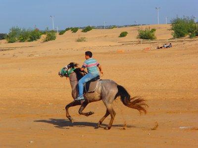 Little kid on his horse