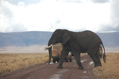 Jambo Masai Tours Limited