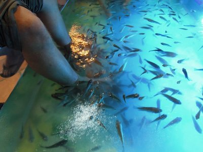 """Fish Massage"" Relaxing while the fish nibble everyone's feet- a funny sensation, best shared with some friends!"