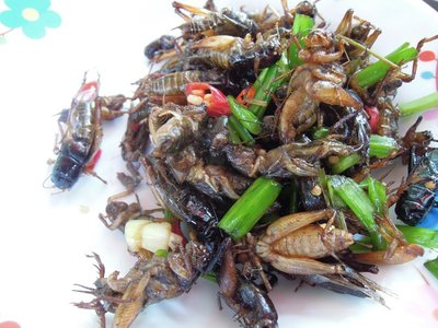 SATURDAY (12). My absolute all time favourite! I was sorry that Mou liked these so much. I kept pushing the frogs over her way, so she would give me a fair chance. Yes, they are grasshoppers with onion, chili and oil. Yum!