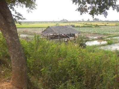 The house of a local rice farmer.