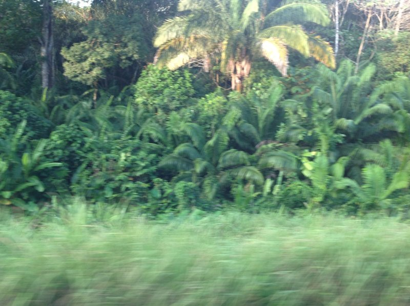 The Jungle speeds by us on the train.