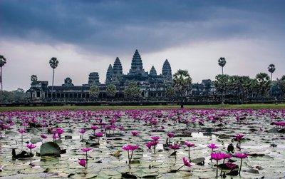 lilies-of-angkor-wat-4.jpg