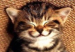 Smiling_Kitten.jpg