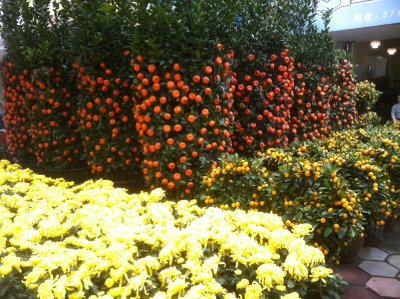 Tangerine plants and Mums