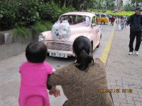 Appreciate the pink beetle