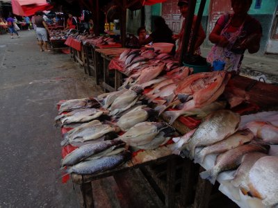 fish on sale in Belen