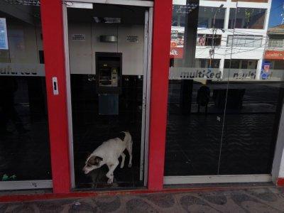 dog ATM