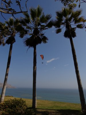 parasailers and palm trees