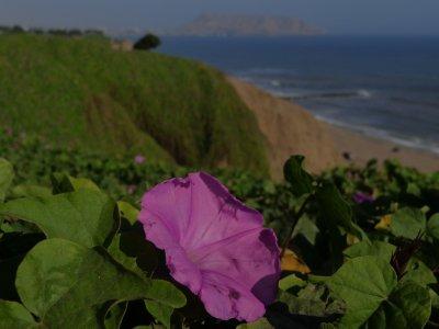 flower and ocean
