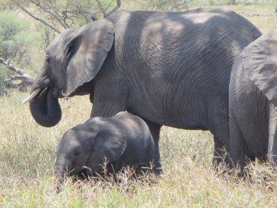 MomBaby_Elephant.jpg