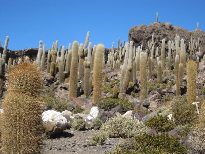 Uyuni_Salar_VofC_032.jpg