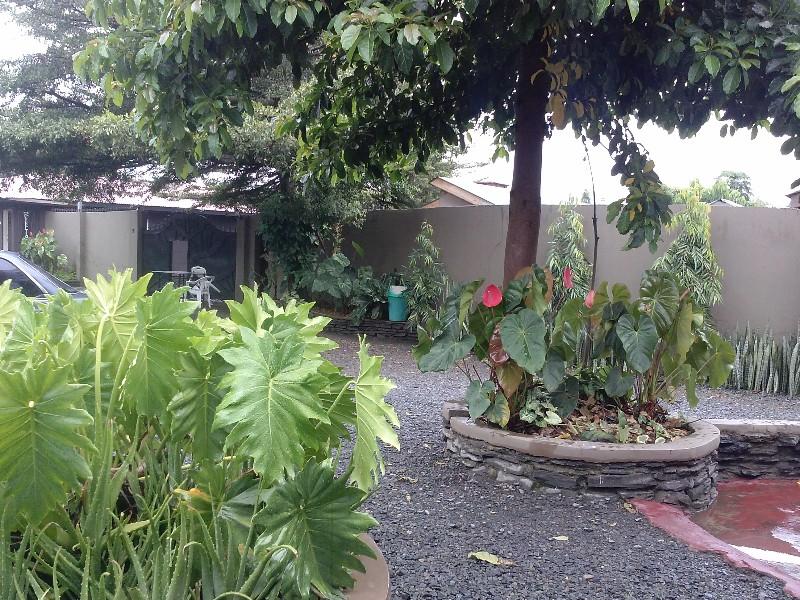 large_garden2014-04-18_12_50_26.jpg