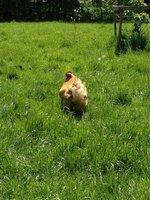 Lou's farm