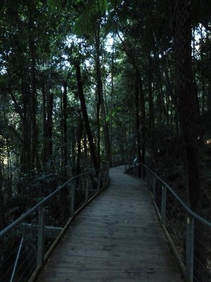 The walkway through the Rainforest on the valley floor at Scenic World