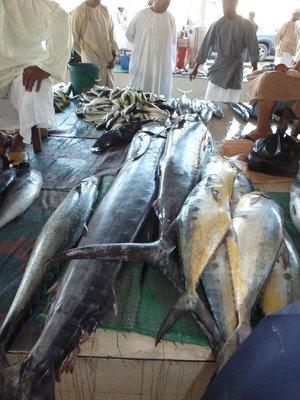 Freshly caught Swordfish and Yellowfin Tuna at Mutrah Fish Market
