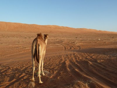 Pesky Camel, get out of my way! We need to get to the top of the sand dune before sunset