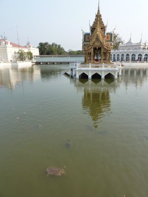 Turtles swiming in the pond surrounding the Aisawan-dhipaya-asana Pavilion