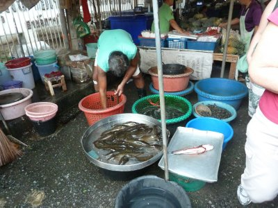 As on other stalls the fish in these buckets moved and were very much still alive!