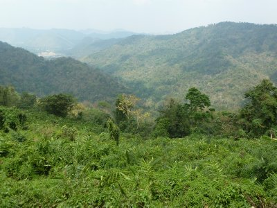 A view of the Forest at the Khao Yai National Park
