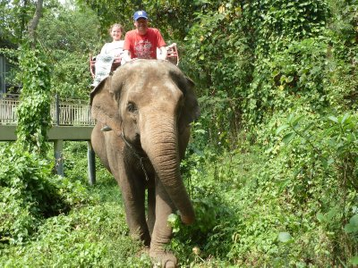 Yep, they initially put me in the driving seat on the back of the elephants head