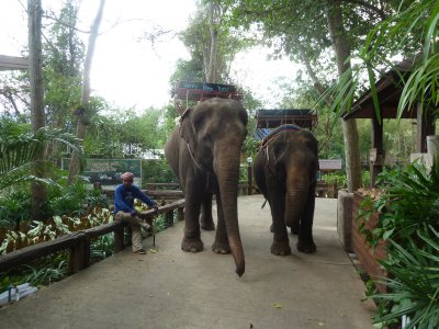 Our final view of our two elephants before we began our long drive back to Bangkok