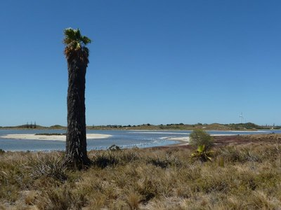 A pink lake on Rottnest Island