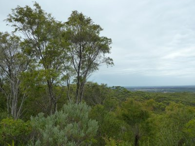 The view from the Boranup Lookout across the Karri Tree Forest to the Indian Ocean