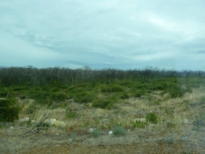 Scrubland at  Surfers Point recovering from the Bushfire that ravaged the area in 2011