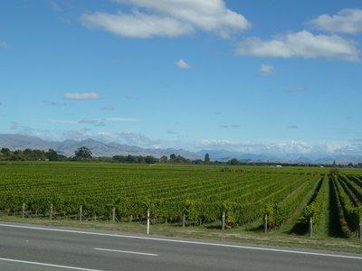 The endless vineyards of Marlborough