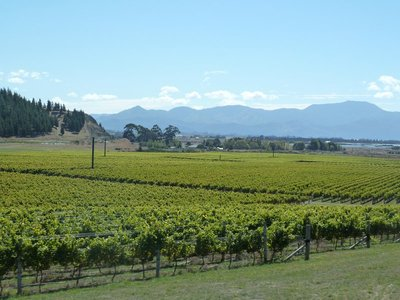 and more vineyards...