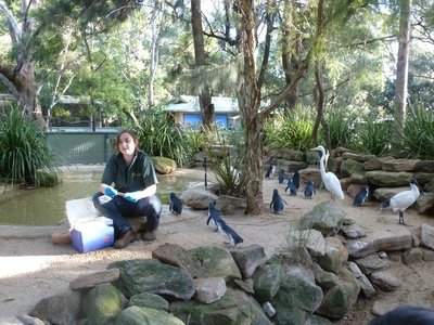 The Penguin enclosure at Featherdale Wildlife Park
