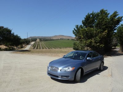 Rows of vines at the Foley Winery near Santa Barbara