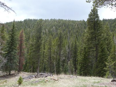 Endless pine trees below us in Staunton State Park