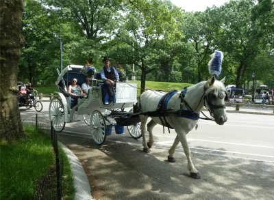 Horse drawn carriage making its way along the Terrace Drive in Central Park