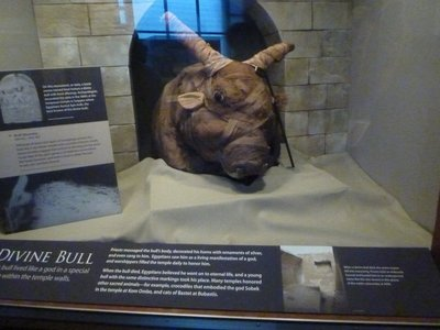 Egyptian Bull Mummy in the Western Cultures Hall
