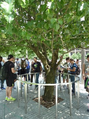 The Survivor Tree at the National September 11 Memorial
