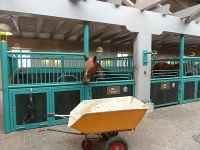 A horse in the Carlsberg Stables