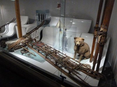 Artifacts from Roald Amundsen's 1911 expedition to the South Pole - yes that is one of the original dogs stuffed!
