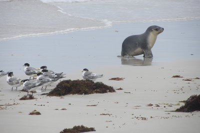 Fur seals and terns