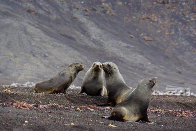 SealStandoff.jpg