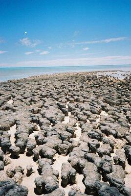 Stromatalites, Western Australia