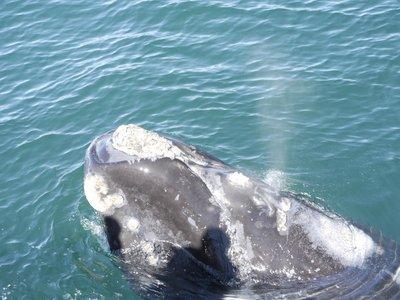 Walvis gespot van op onze rubberboot